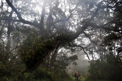 Hiking at Hakalau National Wildlife Refuge