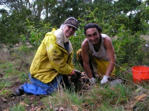 Tree planting at Hakalau Wildlife Refuge